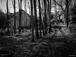 Woodland #8