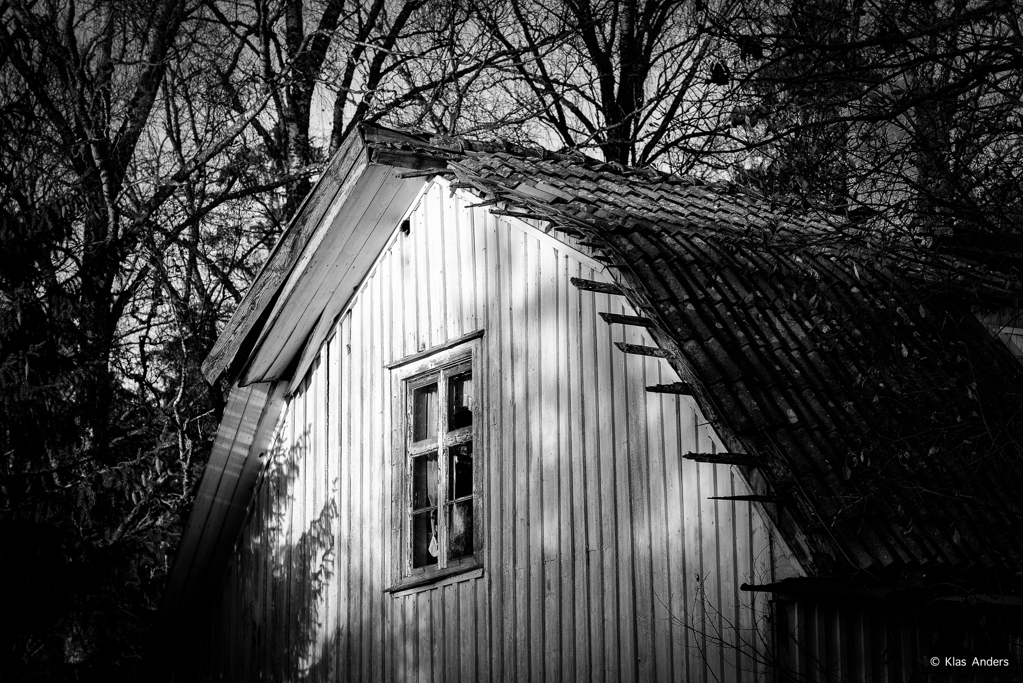 Woodland #3