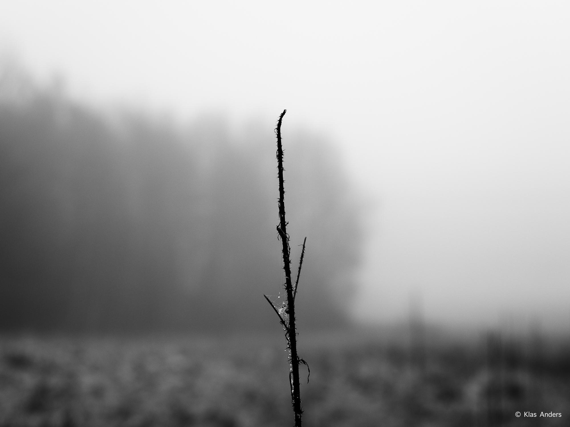 Woodland #14