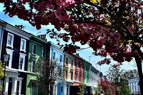Blooming Notting Hill
