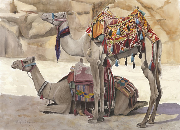 Two Camels of Petra