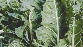 Vitamin K and Why You Should Probably Be Taking It