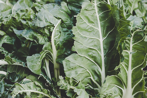 Preservation Series: Blanched Kale or Chard