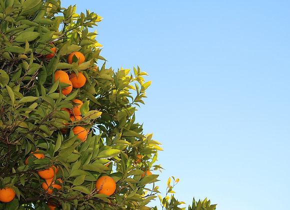 Orange, Sweet