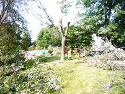 Tree Services for Your Landscape