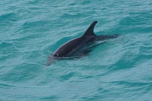 Bahamas Morning Visitor