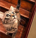 Tillie the Pod-Cat