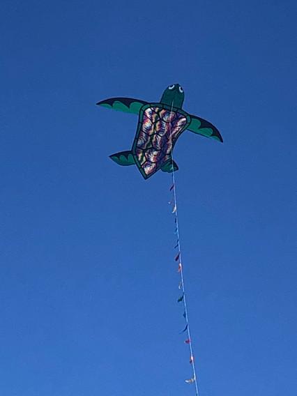Turtle Kite.jpg