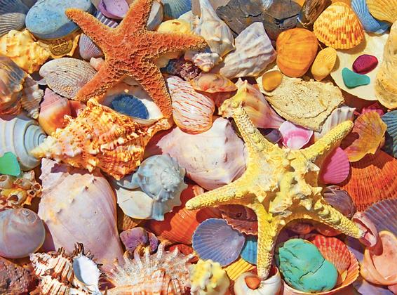 Beach Shells Puzzle 550pc