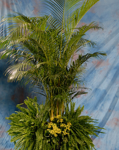 Palm w/ Top Dressing