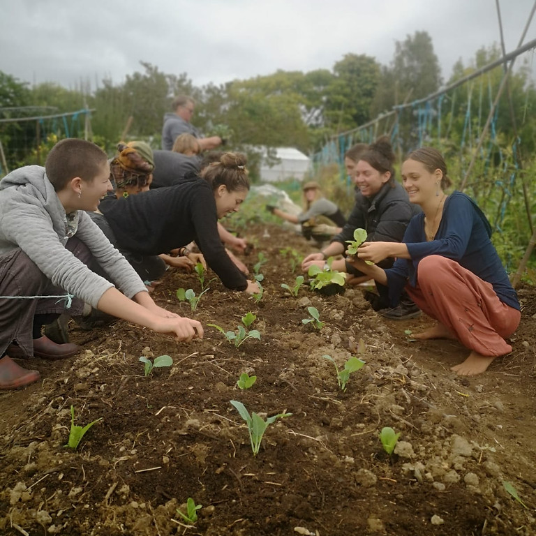 Living Sustainable Course - Spring