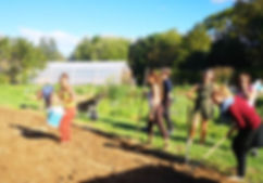 Organic Growing 1 web.jpg