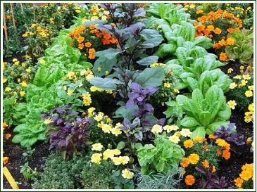 Beneficial Plants