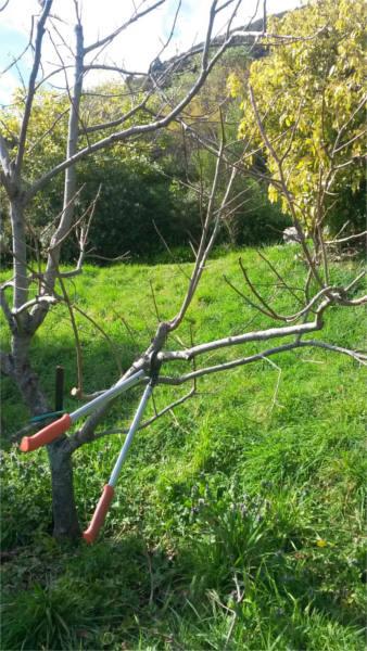 Spring gardening means pruning