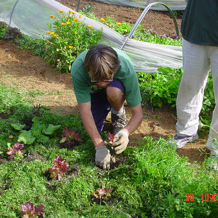 How Gardening Is The Best Therapy!