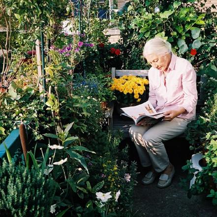 Vegetable Gardening in Cities & Urban Permaculture