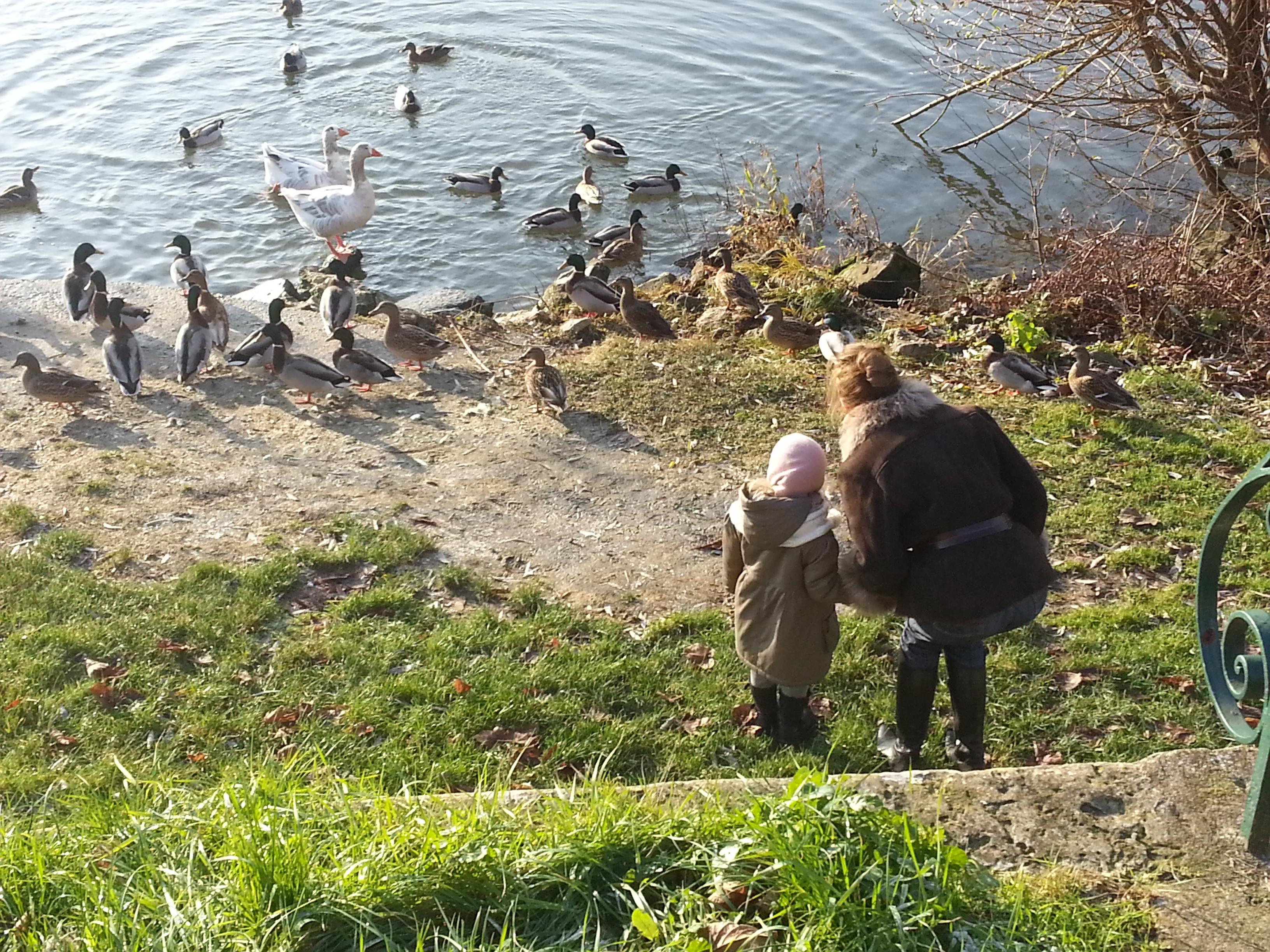 Les canards au Petit Andely
