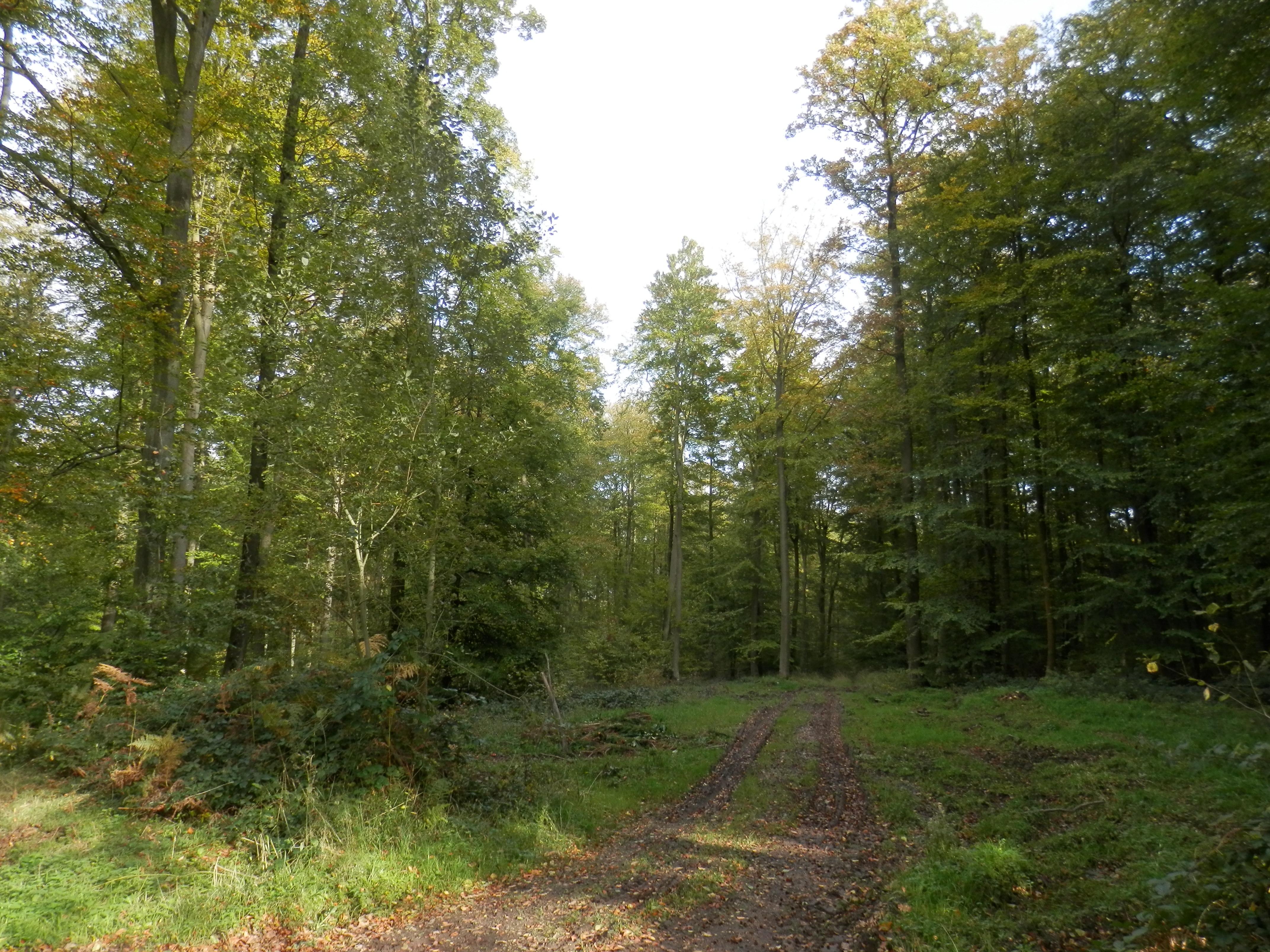 La forêt domaniale de Lyons