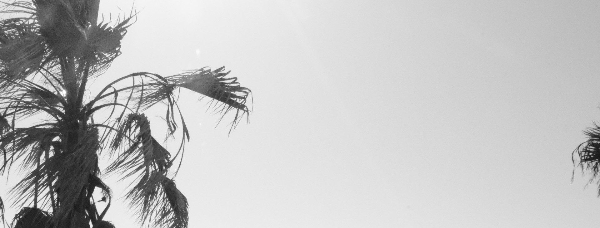 Luna Sonego Design_palms.jpg