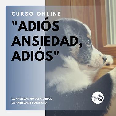 Curso online ansiedad perros