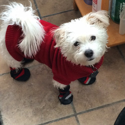 Rescue Dog Finnegan
