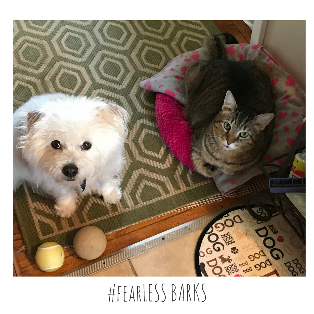 #fearLESS BARKS 14
