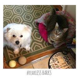 #fearLESS BARKS 14