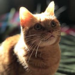 wu kitty