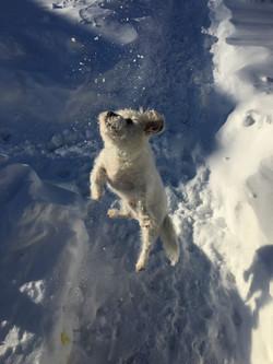 Finnegan extreme dog sports