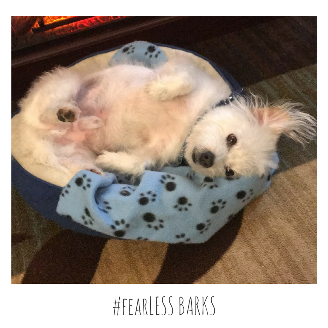 #fearLESS BARKS 17