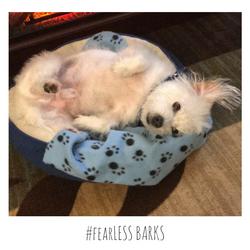 #fearLESS BARKS 17
