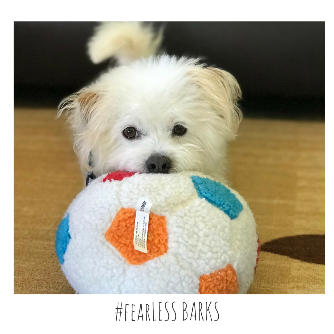 #fearLESS BARKS 13