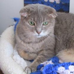 Special Needs Rescue Cat