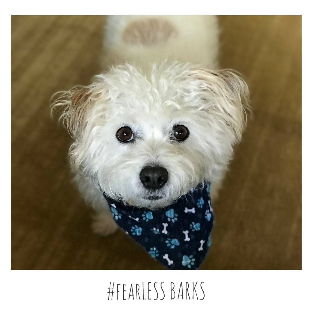 #fearLESS BARKS 26