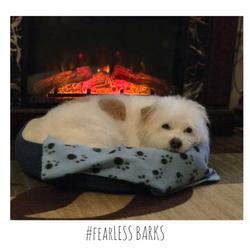 #fearLESS BARKS 12