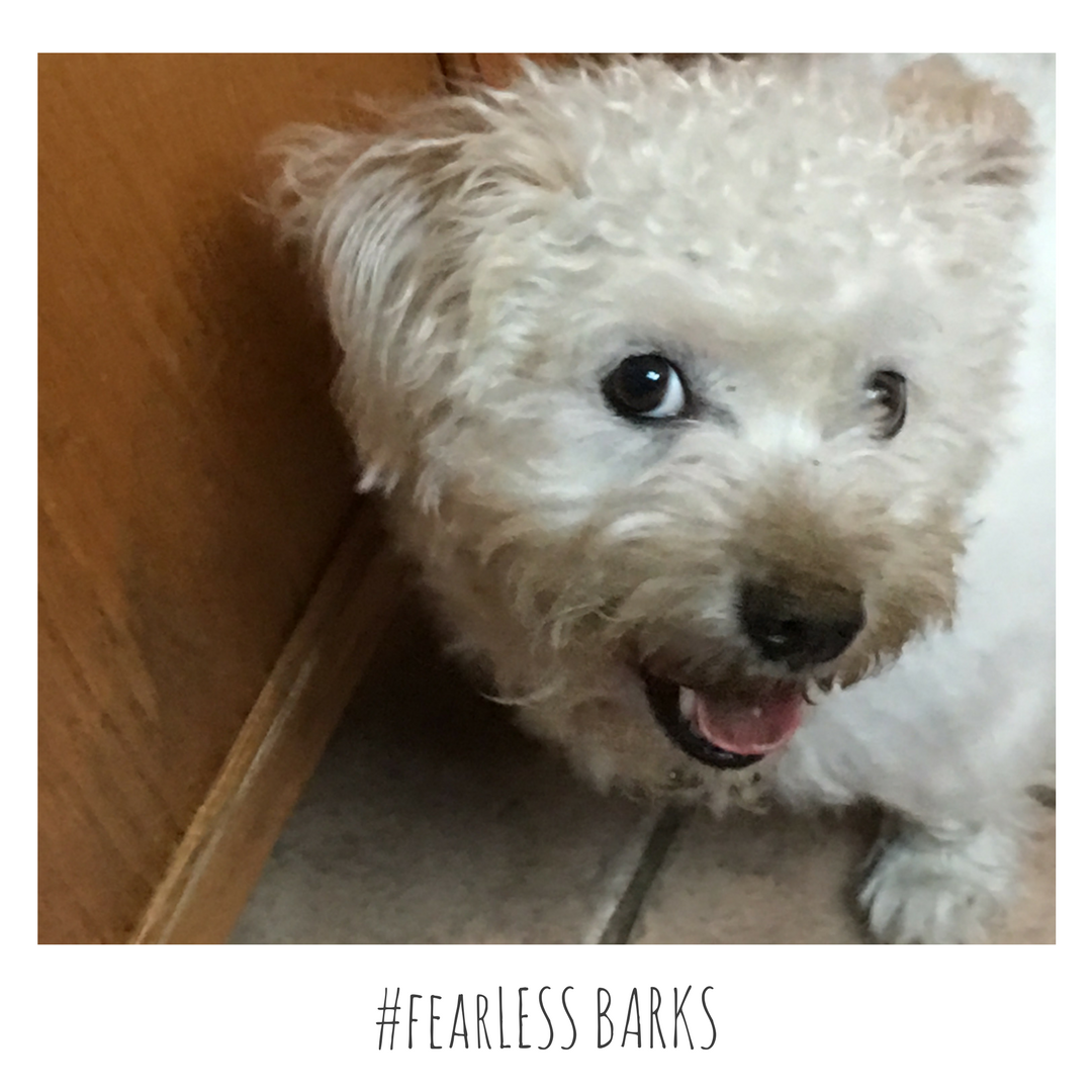 #fearLESS BARKS 5