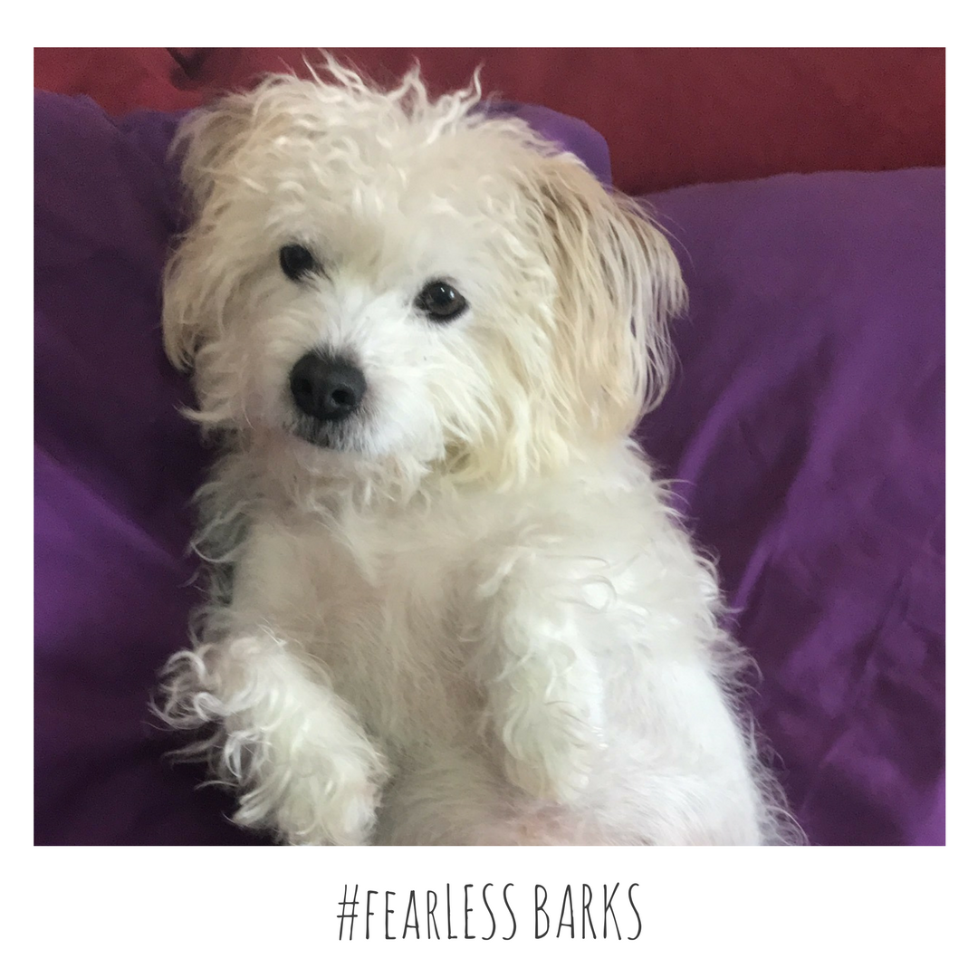 #fearLESS BARKS 3