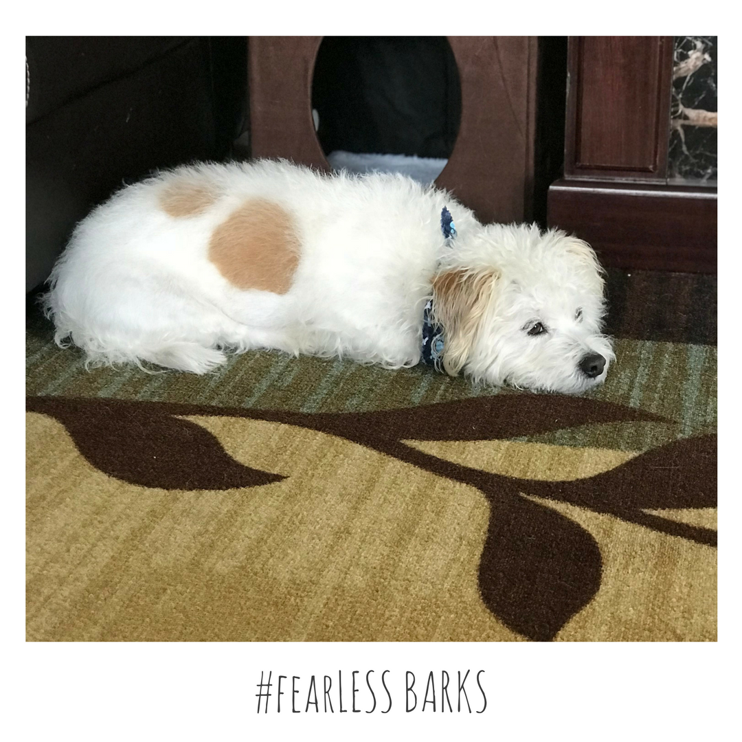 #fearLESS BARKS 25