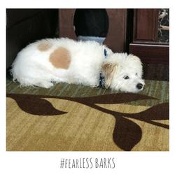 #fearLESS BARKS 25