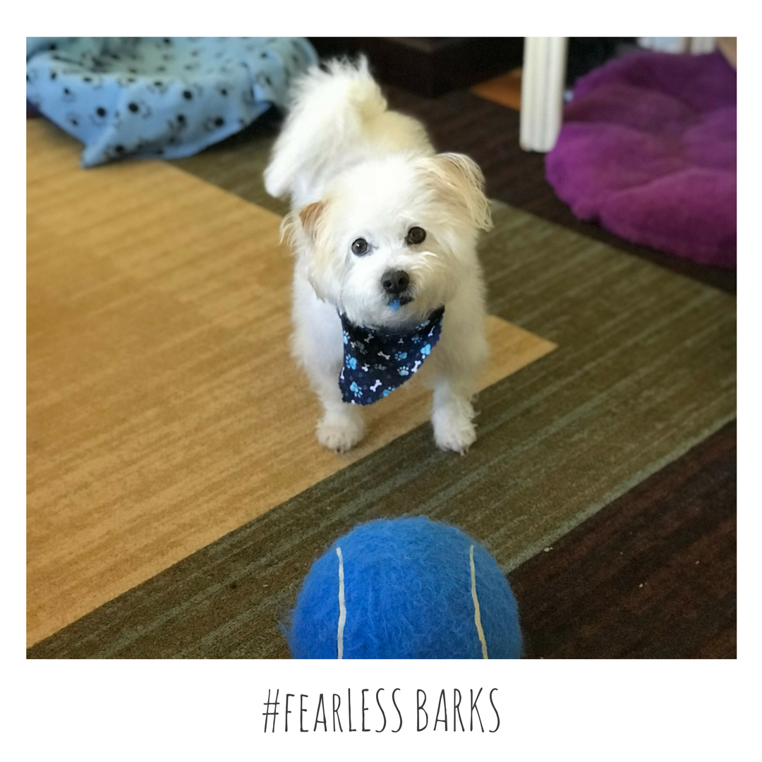 #fearLESS BARKS 18