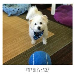 #fearLESS BARKS 18