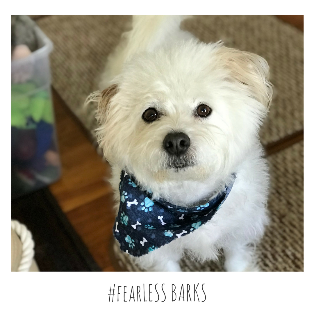 #fearLESS BARKS 15