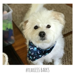 #fearLESS BARKS 15