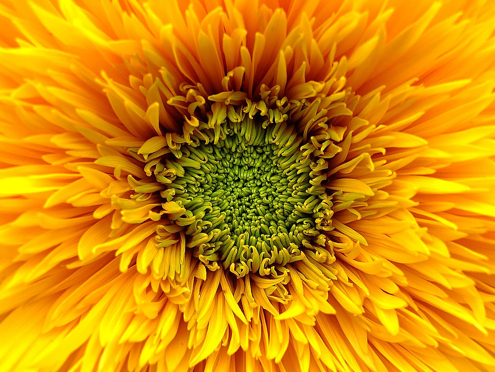 Surrounded by yellow healing light, thank you Daisy.