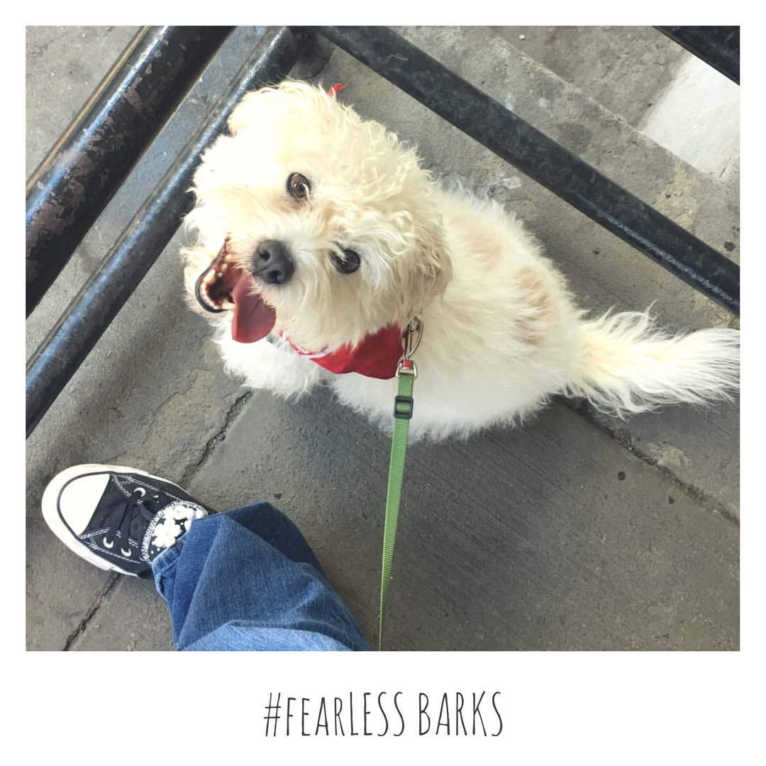 #fearLESS BARKS.png 1