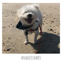 #fearLESS BARKS 20