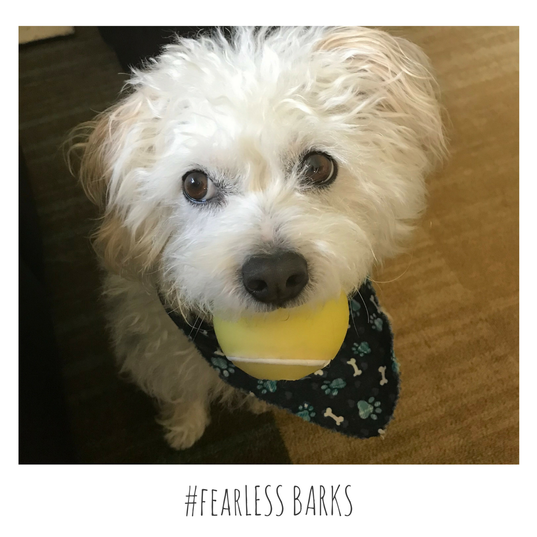 #fearLESS BARKS 24