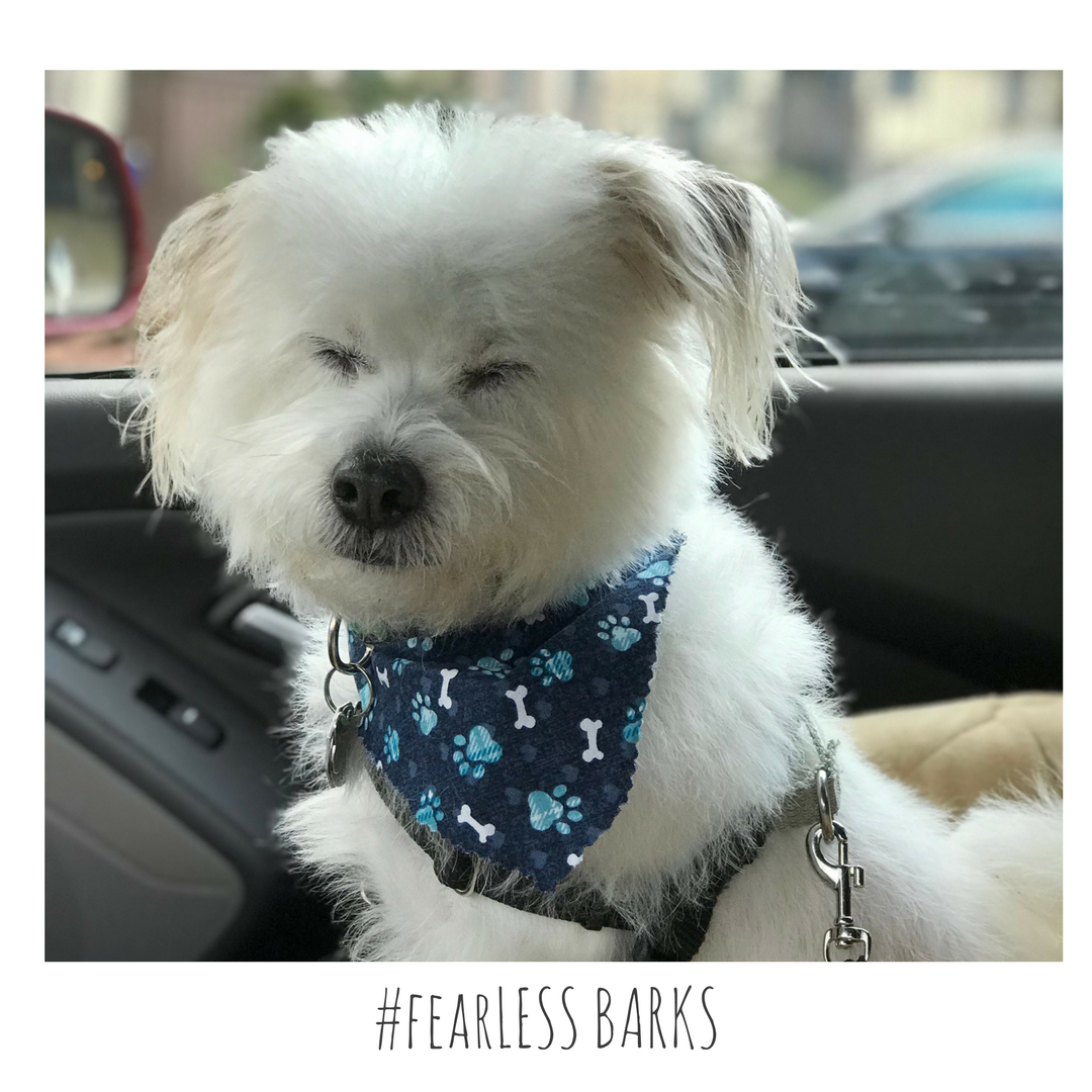 #fearLESS BARKS 11
