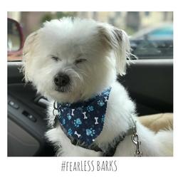 #fearLESS BARKS 11