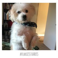 #fearLESS BARKS 19